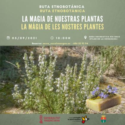 Pinar de Campoverde de Pilar de la Horadada, evento: Inscripción a la rutaetnobotánica 'La magia de nuestras plantas', organizada por el 'Paisaje Protegido de Sierra Escalona' de la Comunitat Valenciana